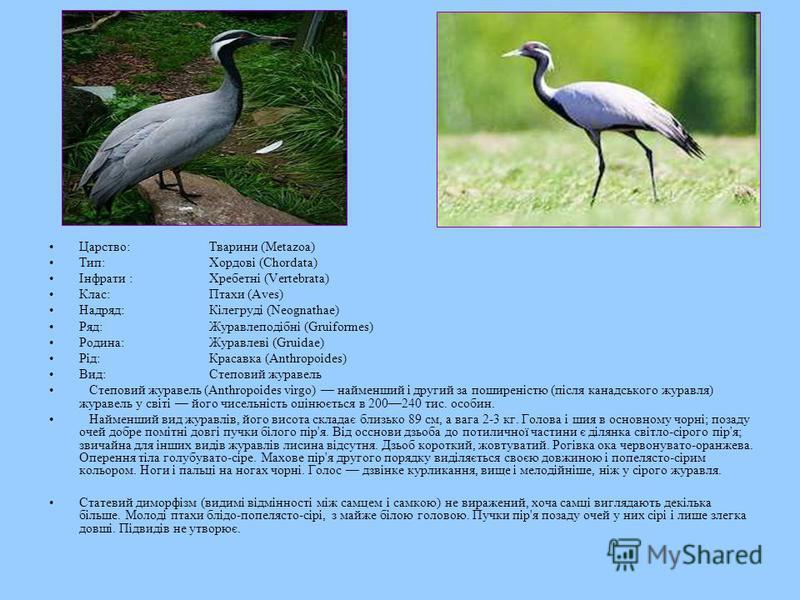 Царство:Тварини (Metazoa) Тип:Хордові (Chordata) Інфрати:Хребетні (Vertebrata) Клас:Птахи (Aves) Надряд:Кілегруді (Neognathae) Ряд:Журавлеподібні (Gruiformes) Родина:Журавлеві (Gruidae) Рід:Красавка (Anthropoides) Вид:Степовий журавель Степовий журав