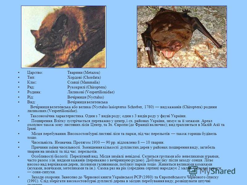 Царство:Тварини (Metazoa) Тип:Хордові (Chordata) Клас:Ссавці (Mammalia) Ряд:Рукокрилі (Chiroptera) Родина:Лиликові (Vespertilionidae) Рід:Вечірниця (Nyctalus) Вид:Вечірниця велетенська Вечі́рниця велете́нська або велика (Nyctalus lasiopterus Schreber