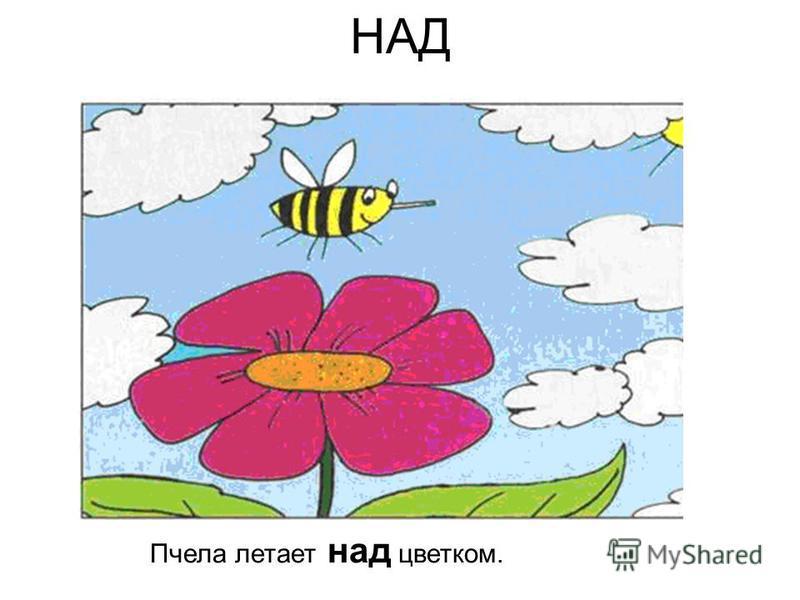 НАД Пчела летает над цветком.