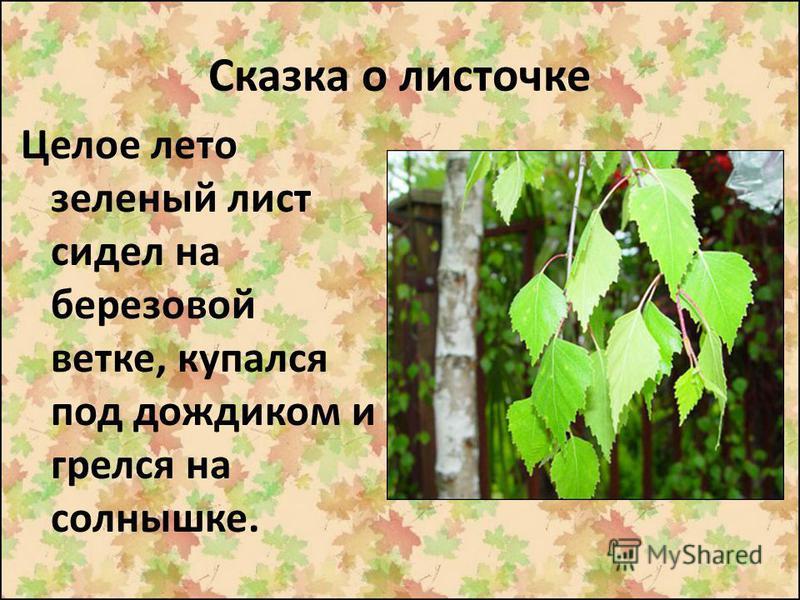 Сказка о листочке Целое лето зеленый лист сидел на березовой ветке, купался под дождиком и грелся на солнышке.