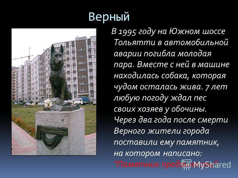 Верный В 1995 году на Южном шоссе Тольятти в автомобильной аварии погибла молодая пара. Вместе с ней в машине находилась собака, которая чудом осталась жива. 7 лет любую погоду ждал пес своих хозяев у обочины. Через два года после смерти Верного жите