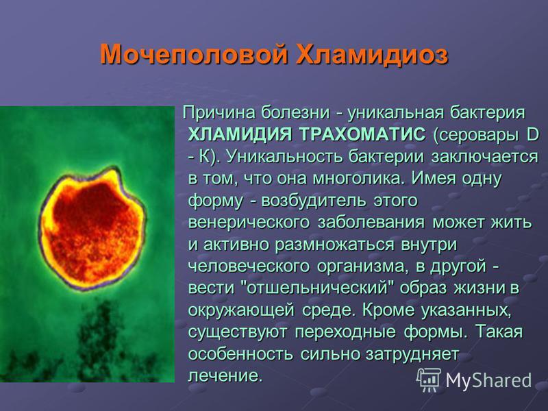 Мочеполовой Хламидиоз Причина болезни - уникальная бактерия ХЛАМИДИЯ ТРАХОМАТИС (серовары D - К). Уникальность бактерии заключается в том, что она многолика. Имея одну форму - возбудитель этого венерического заболевания может жить и активно размножат