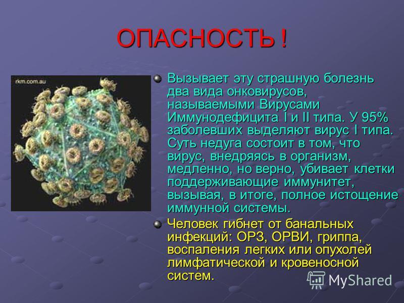 ОПАСНОСТЬ ! Вызывает эту страшную болезнь два вида онковирусов, называемыми Вирусами Иммунодефицита I и II типа. У 95% заболевших выделяют вирус I типа. Суть недуга состоит в том, что вирус, внедряясь в организм, медленно, но верно, убивает клетки по