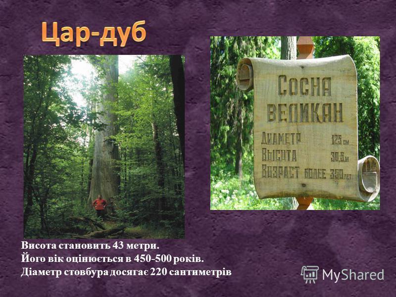 Висота становить 43 метри. Його вік оцінюється в 450-500 років. Діаметр стовбура досягає 220 сантиметрів