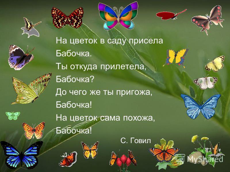 На цветок в саду присела Бабочка. Ты откуда прилетела, Бабочка? До чего же ты пригожа, Бабочка! На цветок сама похожа, Бабочка! С. Говил