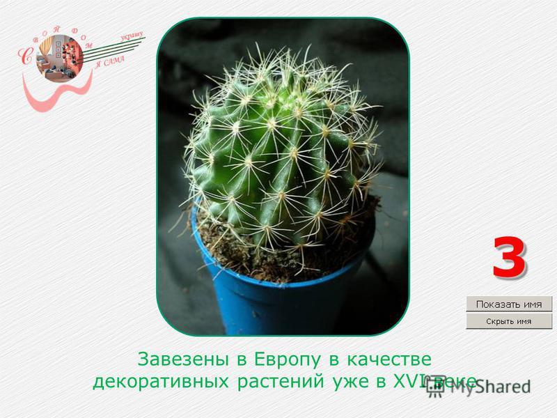 Завезены в Европу в качестве декоративных растений уже в XVI веке 33