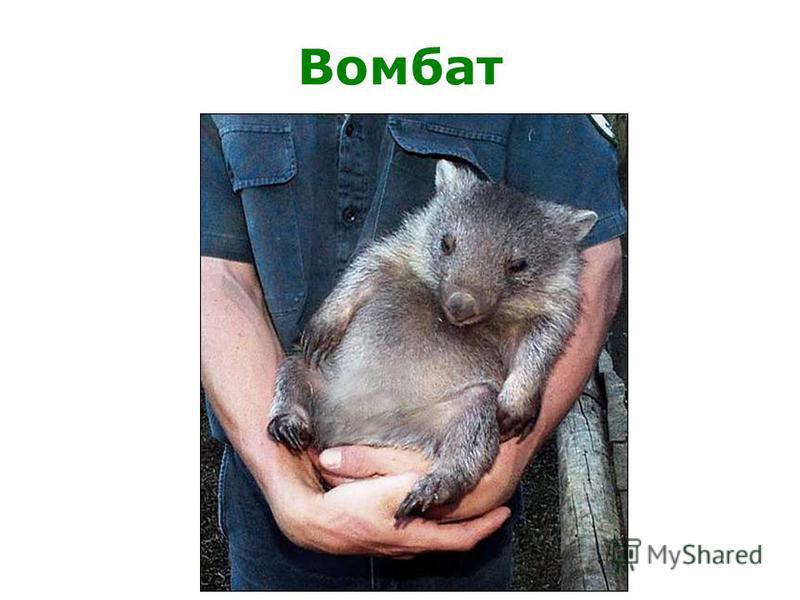 Животные, живущие в австралии
