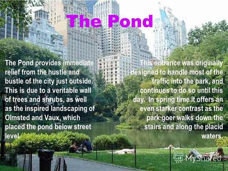 The Pond The Pond provides immediate relief from the hustle and bustle of the city just outside. This is due to a veritable wall of trees and shrubs, as well as the inspired landscaping of Olmsted and Vaux, which placed the pond below street level. T