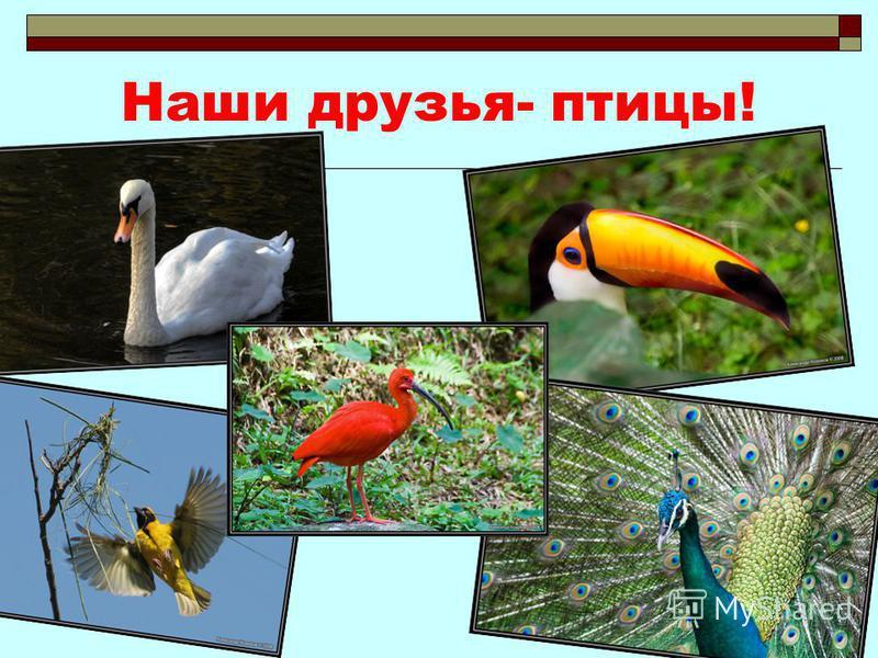 Наши друзья- птицы!