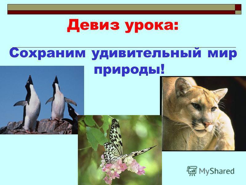 Девиз урока: Сохраним удивительный мир природы!