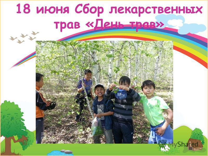 18 июня Сбор лекарственных трав «День трав»
