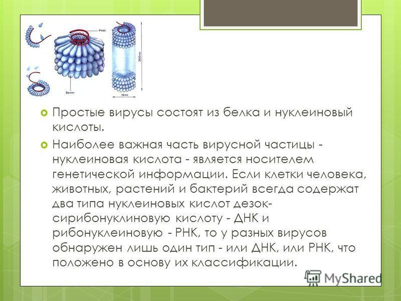 Простые вирусы состоят из белка и нуклеиновый кислоты. Наиболее важная часть вирусной частицы - нуклеиновая кислота - является носителем генетической информации. Если клетки человека, животных, растений и бактерий всегда содержат два типа нуклеиновых