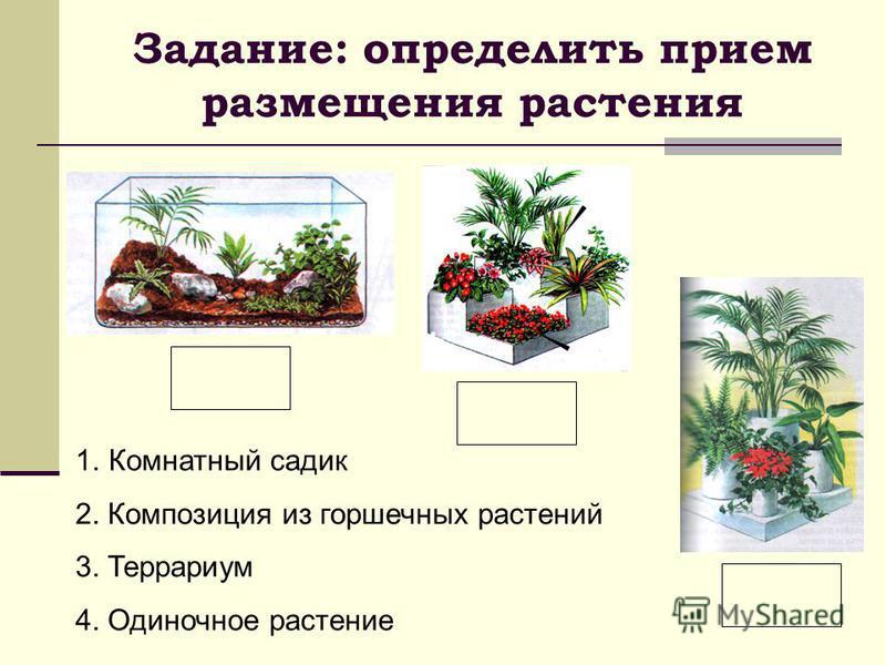 1. Комнатный садик 2. Композиция из горшечных растений 3. Террариум 4. Одиночное растение Задание: определить прием размещения растения