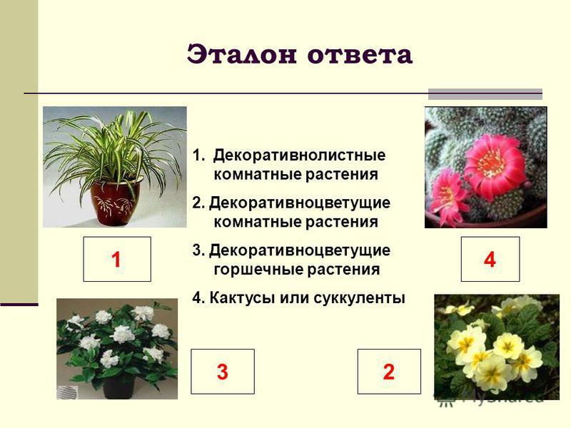 Эталон ответа 1. Декоративнолистные комнатные растения 2. Декоративноцветущие комнатные растения 3. Декоративноцветущие горшечные растения 4. Кактусы или суккуленты 14 32