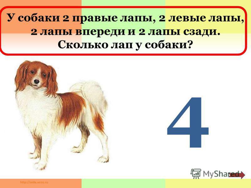 У собаки 2 правые лапы, 2 левые лапы, 2 лапы впереди и 2 лапы сзади. Сколько лап у собаки? 4