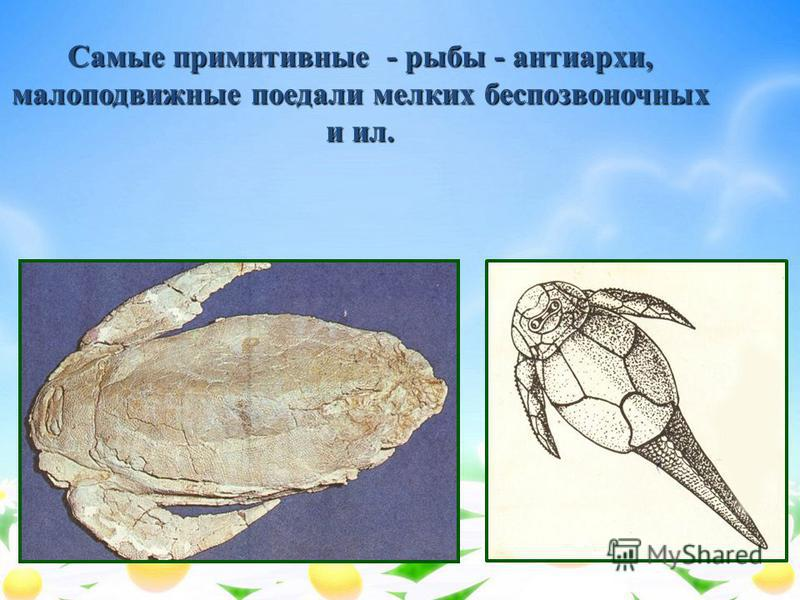 Самые примитивные - рыбы - анти архи, малоподвижные поедали мелких беспозвоночных и ил.