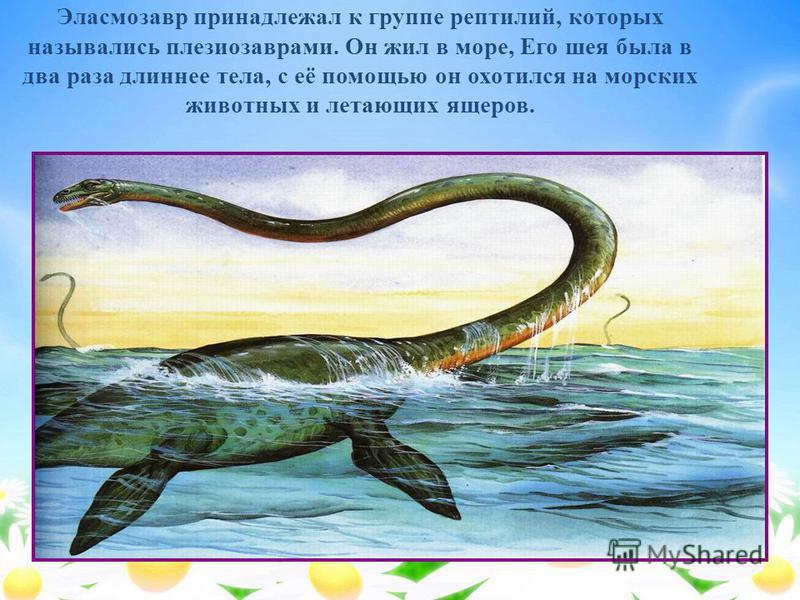 Эласмозавр принадлежал к группе рептилий, которых назывались плезиозаврами. Он жил в море, Его шея была в два раза длиннее тела, с её помощью он охотился на морских животных и летающих ящеров.