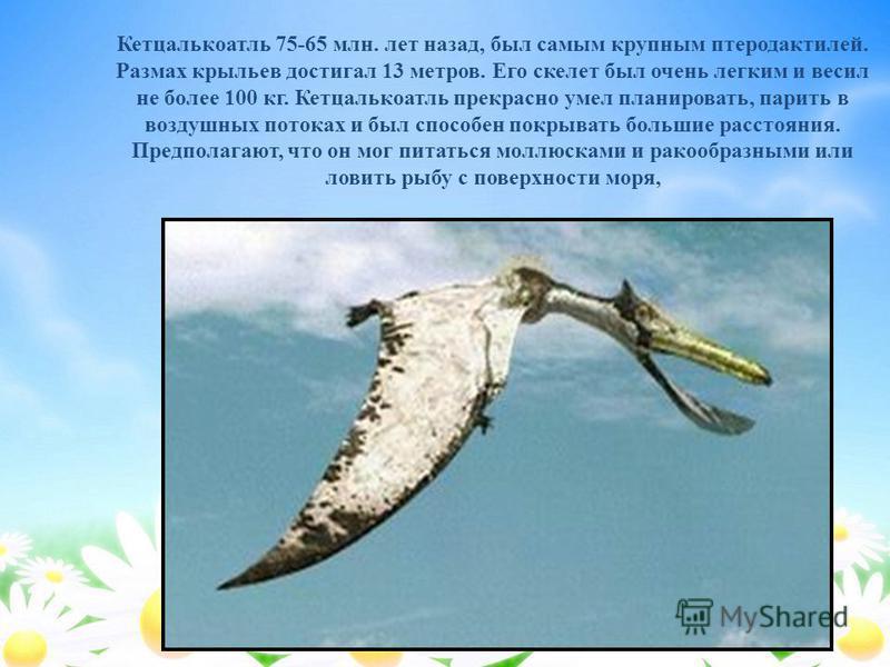 Кетцалькоатль 75-65 млн. лет назад, был самым крупным птеродактилей. Размах крыльев достигал 13 метров. Его скелет был очень легким и весил не более 100 кг. Кетцалькоатль прекрасно умел планировать, парить в воздушных потоках и был способен покрывать
