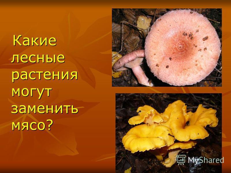 Какие лесные растения могут заменить мясо? Какие лесные растения могут заменить мясо?