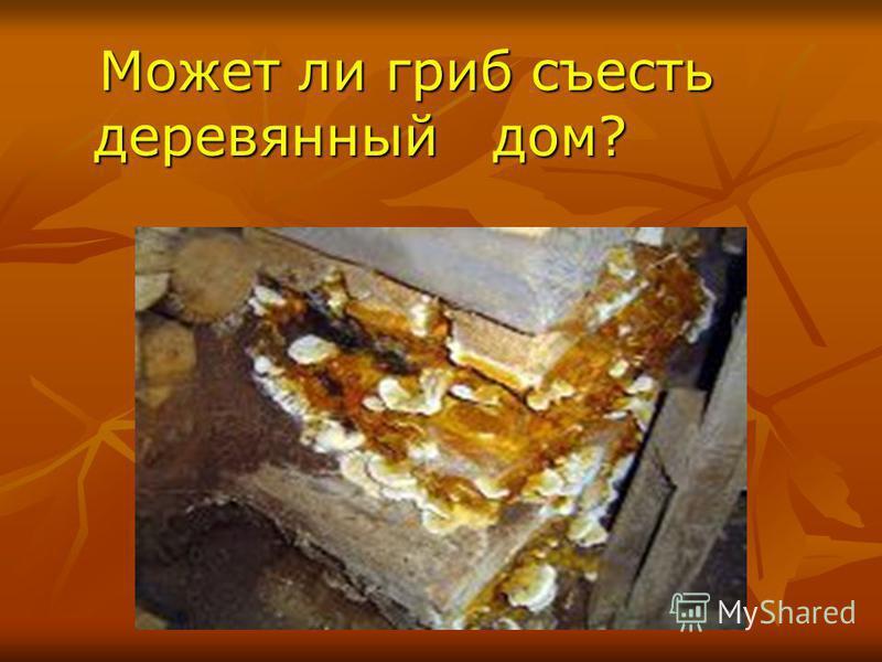 Может ли гриб съесть деревянный дом? Может ли гриб съесть деревянный дом?
