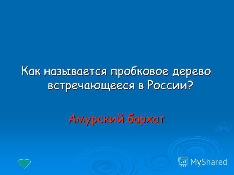 Как называется пробковое дерево встречающееся в России? Амурский бархат