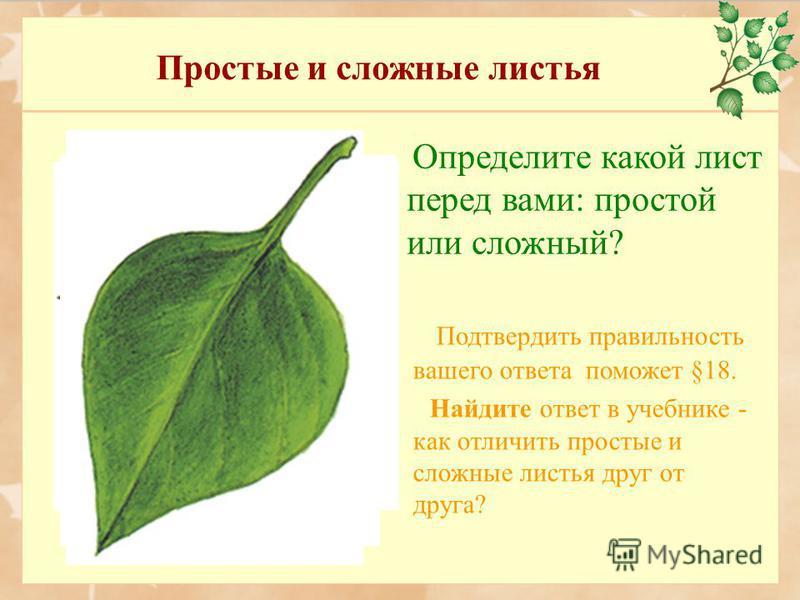 Простые и сложные листья Определите какой лист перед вами: простой или сложный? Подтвердить правильность вашего ответа поможет §18. Найдите ответ в учебнике - как отличить простые и сложные листья друг от друга?