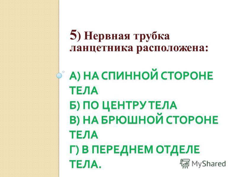 А ) НА СПИННОЙ СТОРОНЕ ТЕЛА Б ) ПО ЦЕНТРУ ТЕЛА В ) НА БРЮШНОЙ СТОРОНЕ ТЕЛА Г ) В ПЕРЕДНЕМ ОТДЕЛЕ ТЕЛА. 5 ) Нервная трубка ланцетника расположена: