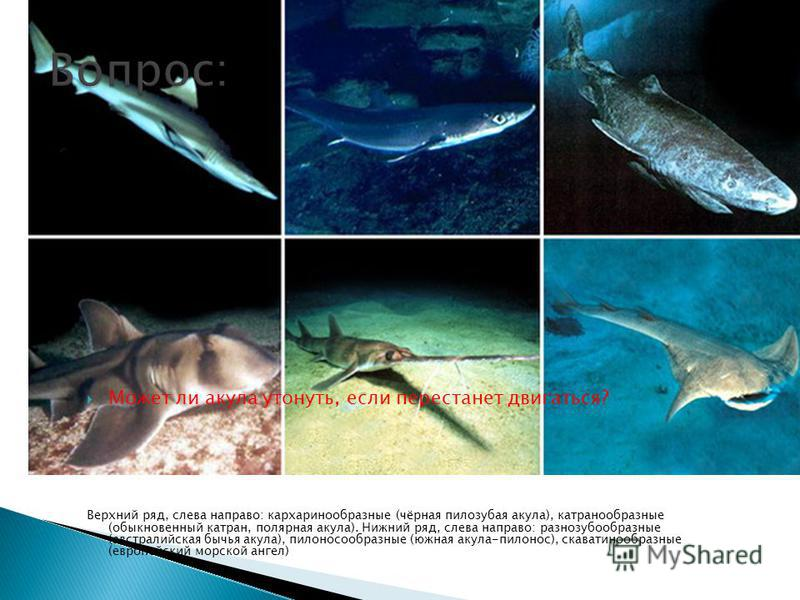 Может ли акула утонуть, если перестанет двигаться? Верхний ряд, слева направо: кархаринообразные (чёрная пилозубая акула), катран о образные (обыкновенный катран, полярная акула). Нижний ряд, слева направо: разнозубообразные (австралийская бычья акул