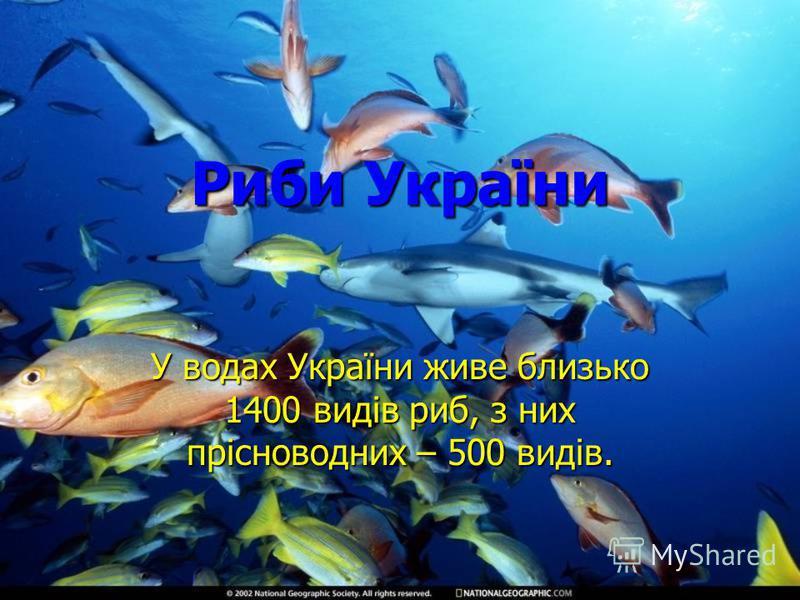 Риби України У водах України живе близько 1400 видів риб, з них прісноводних – 500 видів.