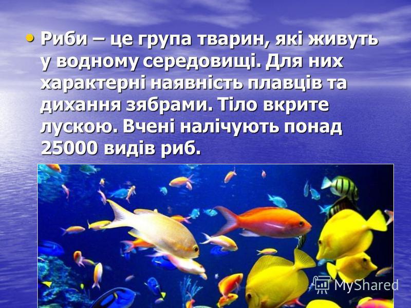 Риби – це група тварин, які живуть у водному середовищі. Для них характерні наявність плавців та дихання зябрами. Тіло вкрите лускою. Вчені налічують понад 25000 видів риб. Риби – це група тварин, які живуть у водному середовищі. Для них характерні н