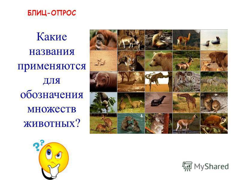 земноводные, млекопитающие, хладнокровные и т.п. Какие названия применяются для обозначения множеств животных?