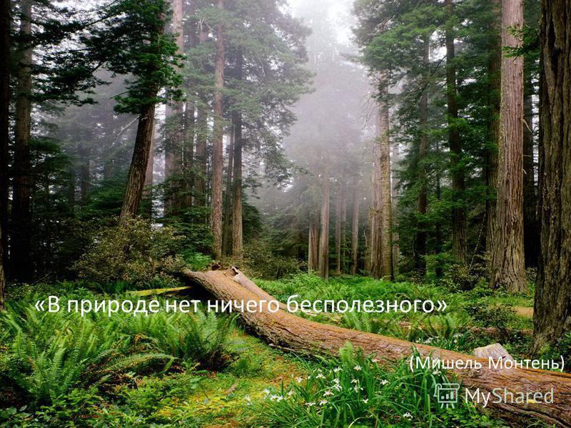 «В природе нет ничего бесполезного» (Мишель Монтень)