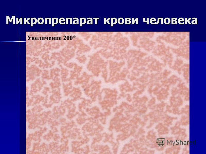 Микропрепарат крови человека