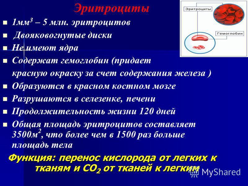Эритроциты 1 мм 3 – 5 млн. эритроцитов Двояковогнутые диски Не имеют ядра Содержат гемоглобин (придает красную окраску за счет содержания железа ) Образуются в красном костном мозге Разрушаются в селезенке, печени Продолжительность жизни 120 дней Общ