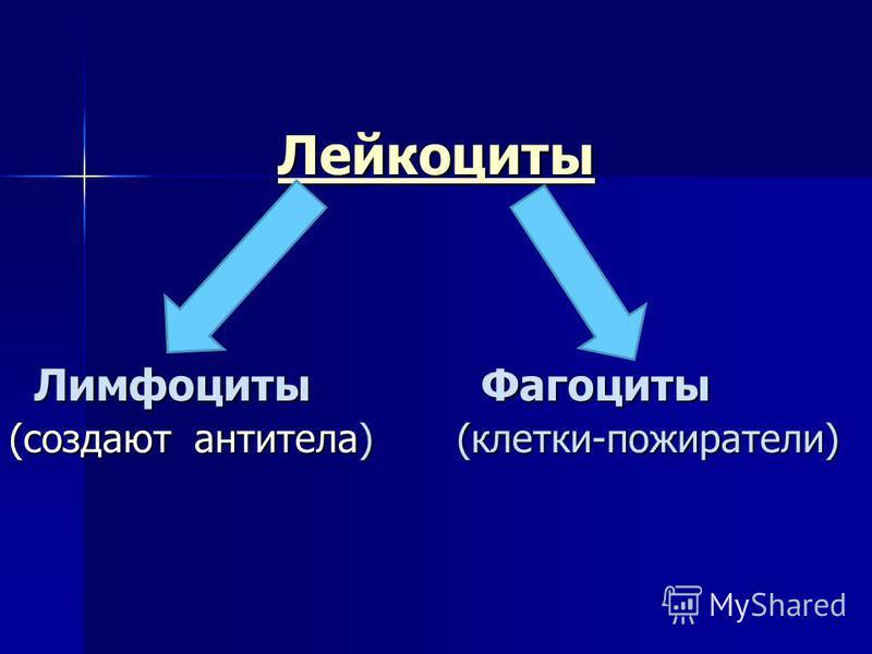 Лейкоциты Лимфоциты Фагоциты Лимфоциты Фагоциты (создают антитела) (клетки-пожиратели)