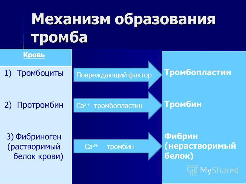 Механизм образования тромба Кровь 1) Тромбоциты 2) Протромбин 3)Фибриноген (растворимый белок крови) Повреждающий фактор Тромбопластин Тромбин Фибрин (нерастворимый белок) Са 2+ тромбопластин Са 2+ тромбин