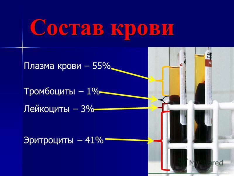 Состав крови Плазма крови – 55% Тромбоциты – 1% Лейкоциты – 3% Эритроциты – 41%