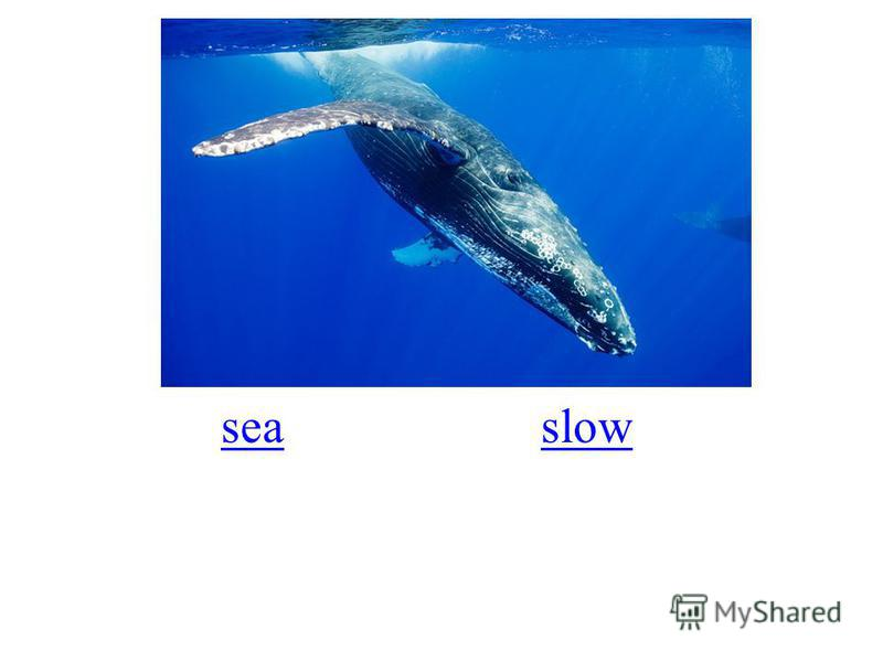 seaslow