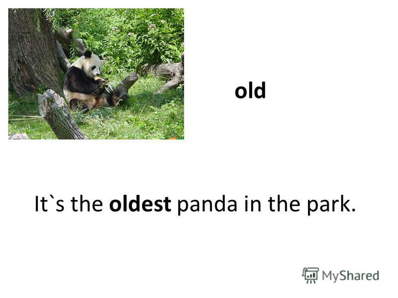 old It`s the oldest panda in the park.