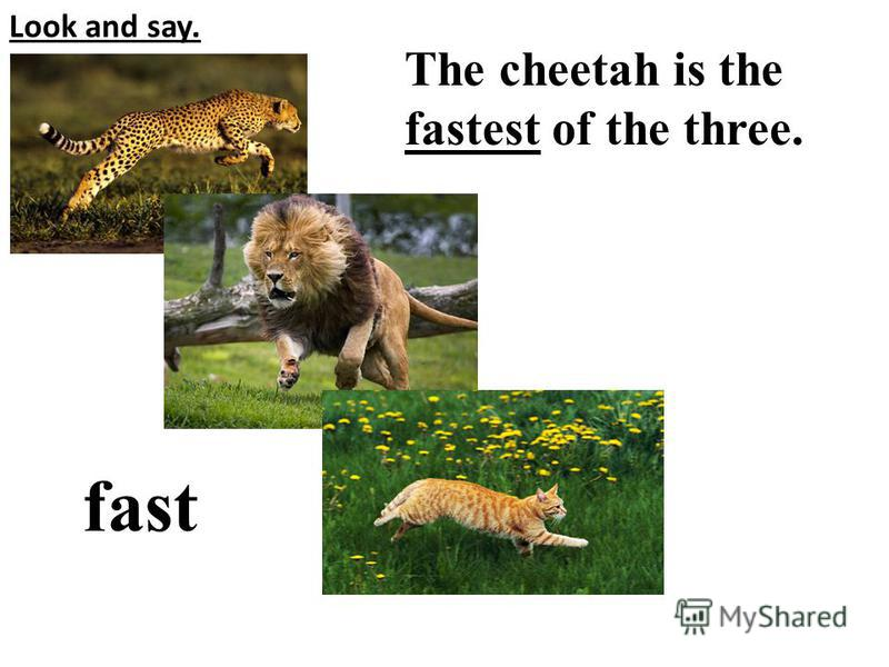 Look and say. The cheetah is the fastest of the three. fast