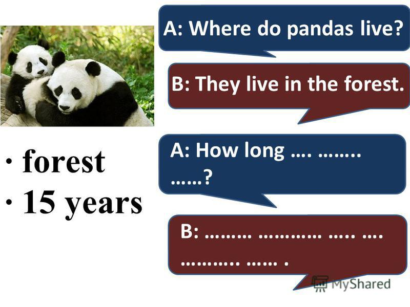 · forest · 15 years A: Where do pandas live? B: They live in the forest. A: How long …. …….. ……? B: ……… ………… ….. …. ……….. …….