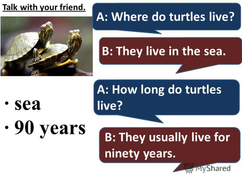 Talk with your friend. · sea · 90 years A: Where do turtles live? B: They live in the sea. A: How long do turtles live? B: They usually live for ninety years.