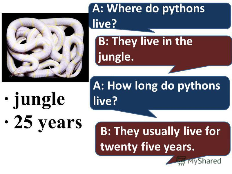 · jungle · 25 years A: Where do pythons live? B: They live in the jungle. A: How long do pythons live? B: They usually live for twenty five years.