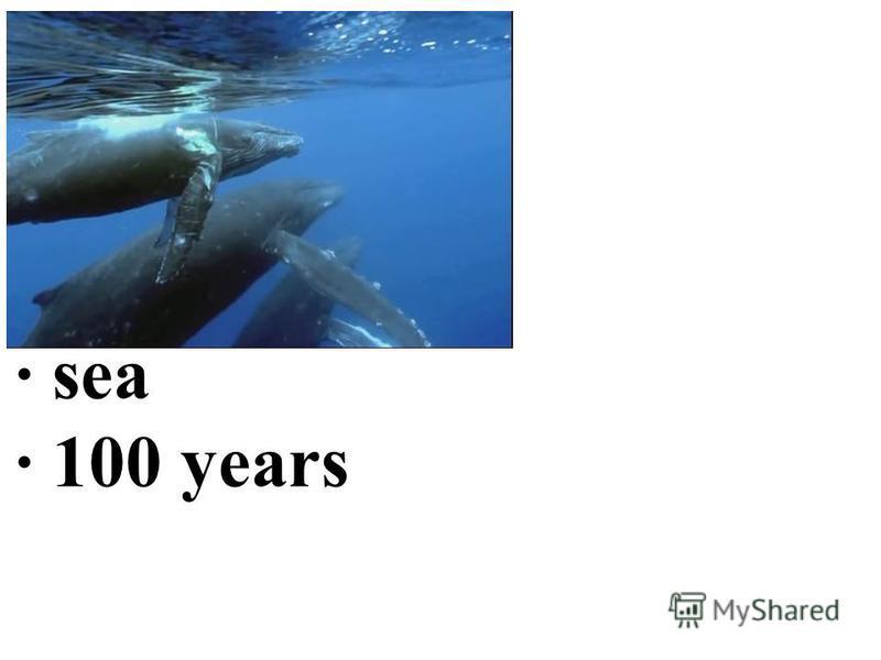 · sea · 100 years