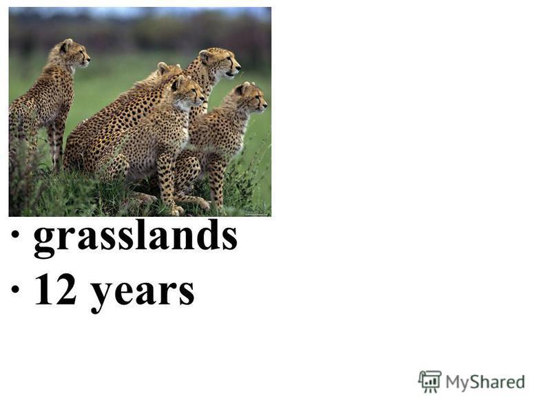· grasslands · 12 years