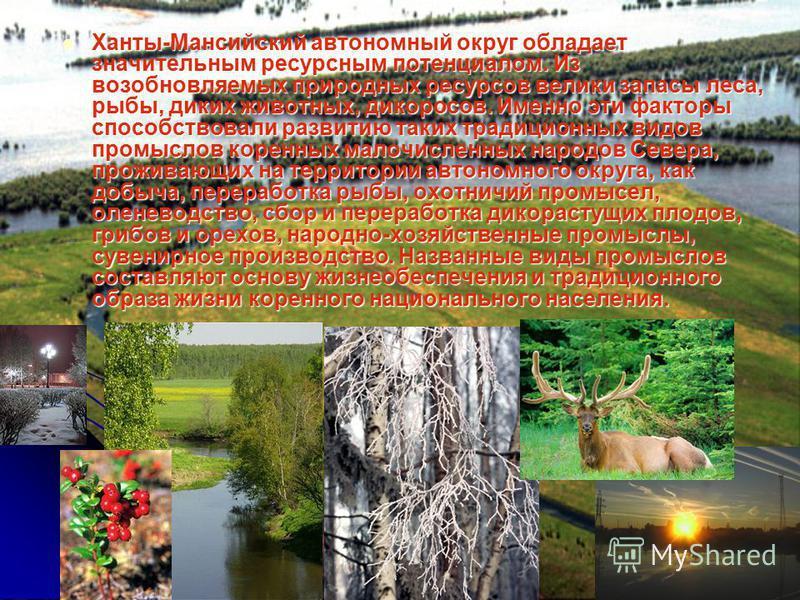 Ханты-Мансийский автономный округ обладает значительным ресурсным потенциалом. Из возобновляемых природных ресурсов велики запасы леса, рыбы, диких животных, дикоросов. Именно эти факторы способствовали развитию таких традиционных видов промыслов кор