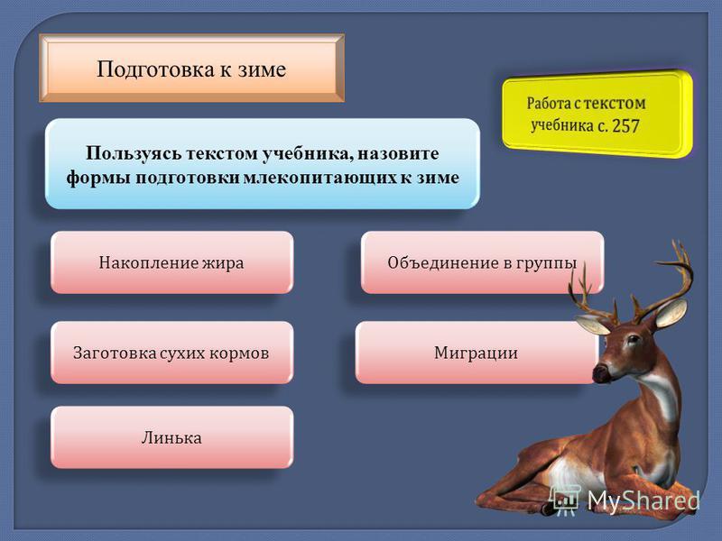 Подготовка к зиме Пользуясь текстом учебника, назовите формы подготовки млекопитающих к зиме Накопление жира Заготовка сухих кормов Линька Объединение в группы Миграции