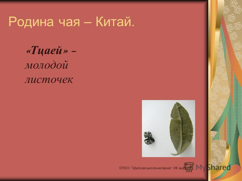Родина чая – Китай. « Тцаей » – молодой листочек ОГКОУ Шуйская школа-интернат VIII вида