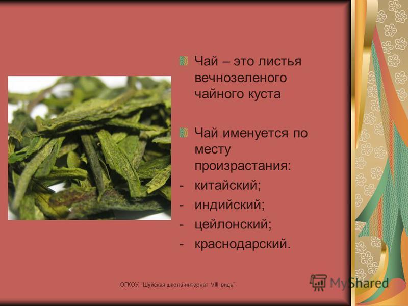 Чай – это листья вечнозеленого чайного куста Чай именуется по месту произрастания: -китайский; -индийский; -цейлонский; -краснодарский. ОГКОУ Шуйская школа-интернат VIII вида