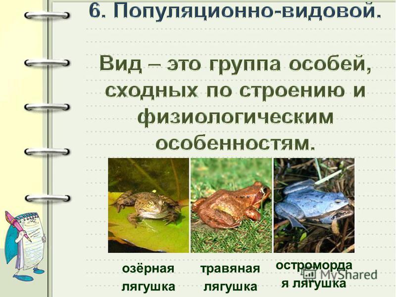 остроморда я лягушка травяная лягушка озёрная лягушка